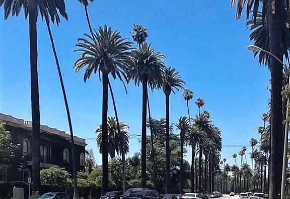 Palmeiras em Los Angeles - Califórnia