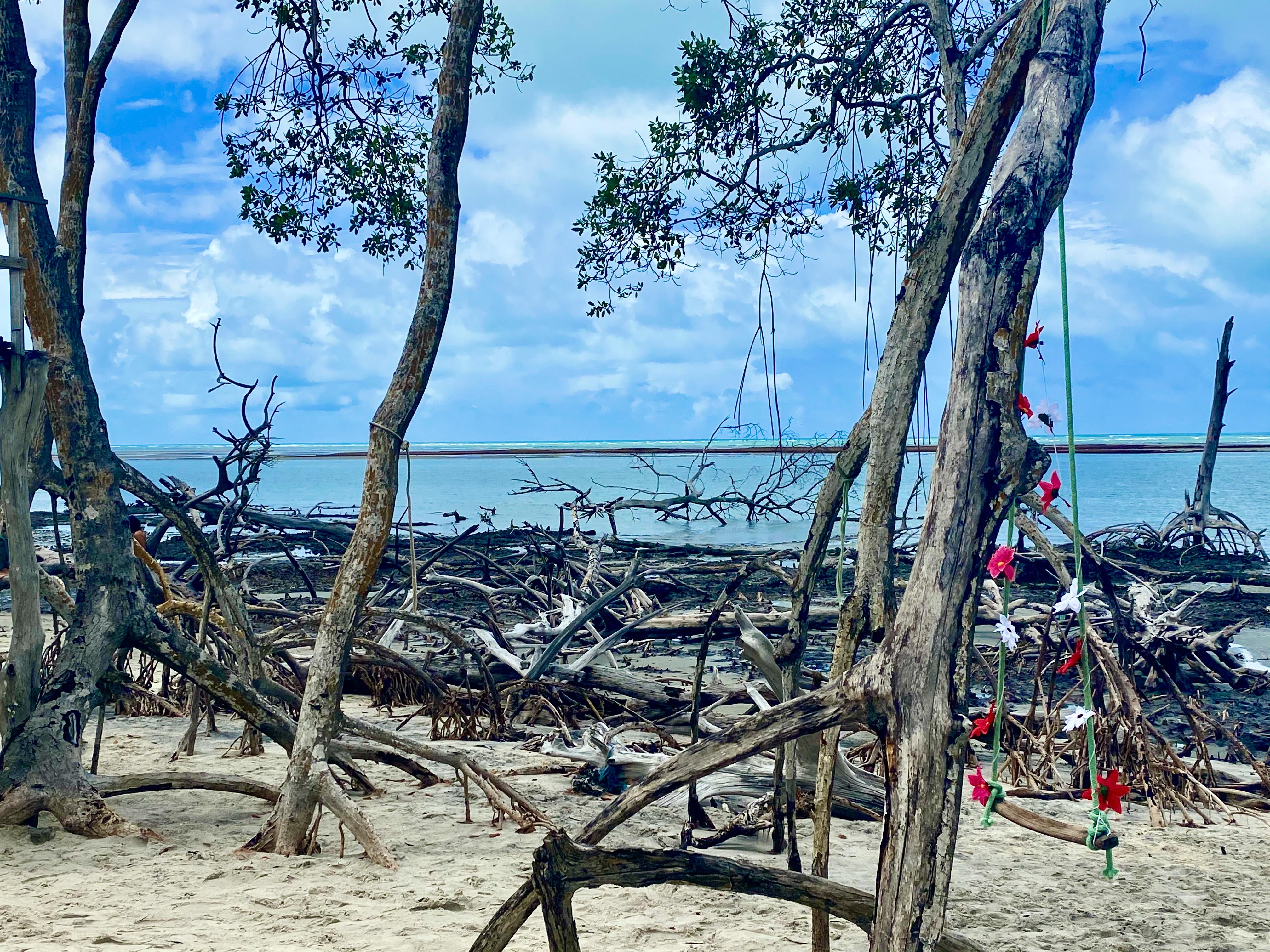 Balanços para foto mangue seco Ceara Brasil