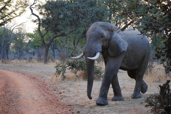 elephant-2042695_960_720